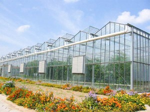Greenhouse Company